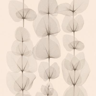 A.S. Creation X-Ray   342451   Vliestapete Blumen   0.53 m x 10.05 m   Beige