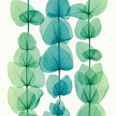 A.S. Creation X-Ray   342454   Vliestapete Blumen   0.53 m x 10.05 m   Grün